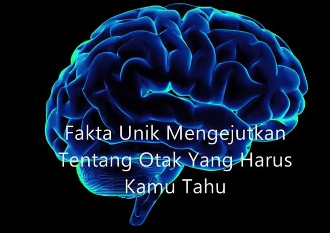 Mengejutkan !!! Inilah Fakta Unik Tentang Otak Yang Harus Kamu Tahu !
